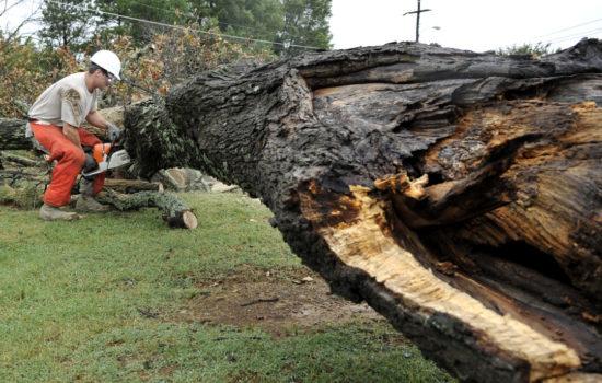 fallen tree branch removal toronto