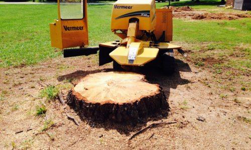Stump-Removal-process